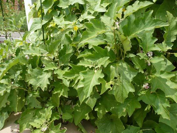 Instant Organic Garden : Community gardens instant organic garden